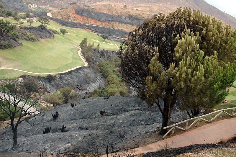 Kontrasten är stor mellan de brända vegetationen och den gröna golfbanan. Ett pinjeträd har fått bestående men.