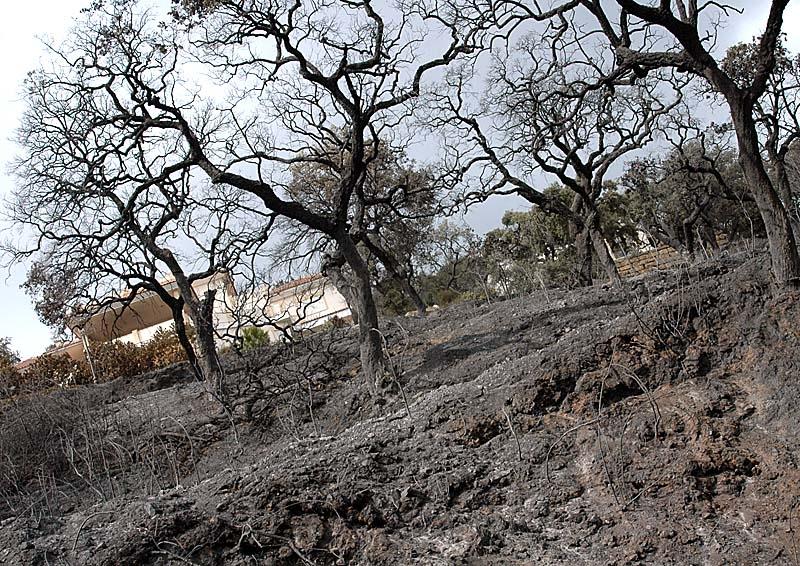 """Mijas borgmästare Ángel Nozal (PP) beskriver effekten av branden som """"helvetisk""""."""