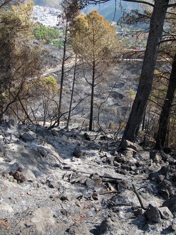 En naturbrand lämnar alltid efter sig stora sår, som kan ta åratal att läka.