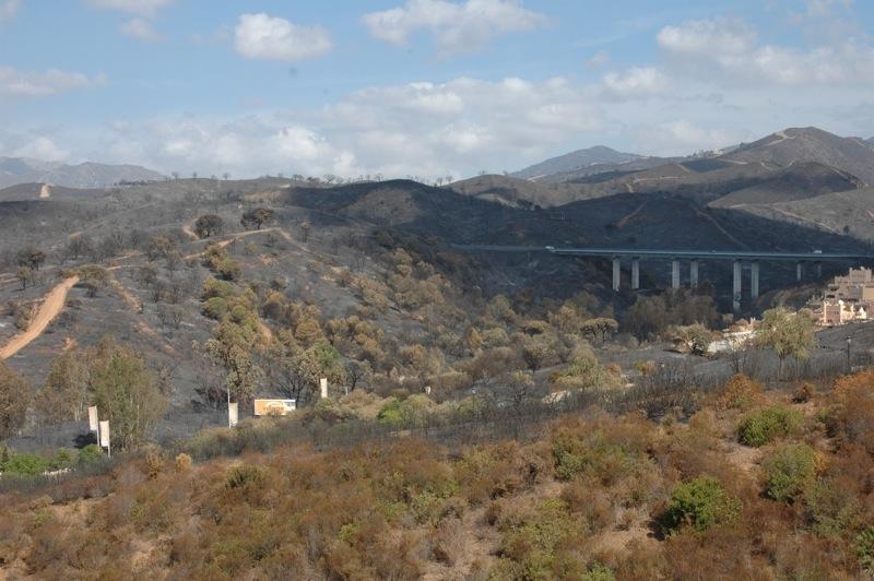 Branden skövlade naturen på båda sidor om betalmotorvägen AP-7.