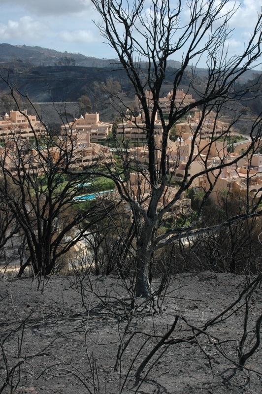 Några bostadsområden blev helt omringade av lågorna, men husen och det gröna poolområdet står kvar.