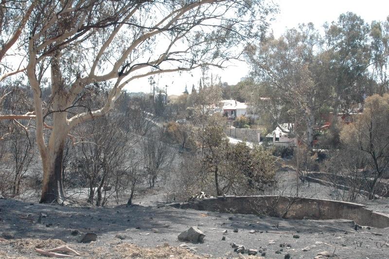 Förödelsen i Elviria efter storbranden 30-31 augusti.
