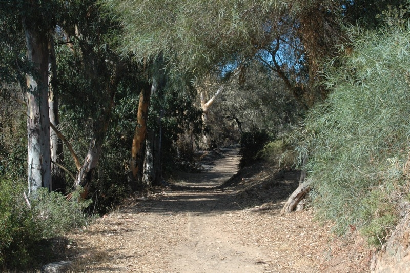 Efter bara n&aring;gra minuters promenad fr&aring;n kustv&auml;gen sk&ouml;njar vi de f&ouml;rsta s&aring;ren i naturen.<br /><br />---<br /><br />Tras s&oacute;lo un par de minutos de paseo desde la carretera vemos los primeros da&ntilde;os en el paisaje.