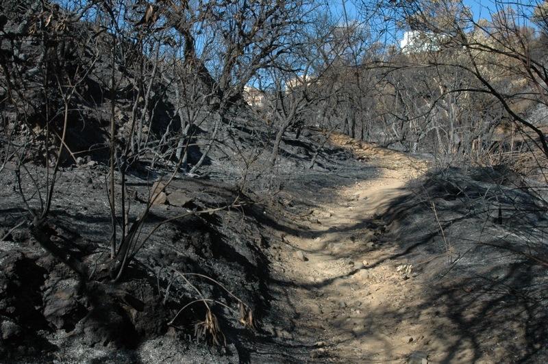 Stigen &auml;r sp&ouml;klikt or&ouml;rd, mitt i det svarta landskap.<br /><br />---<br /><br />El camino esta llamativamente intacto, en medio del paisaje negro.