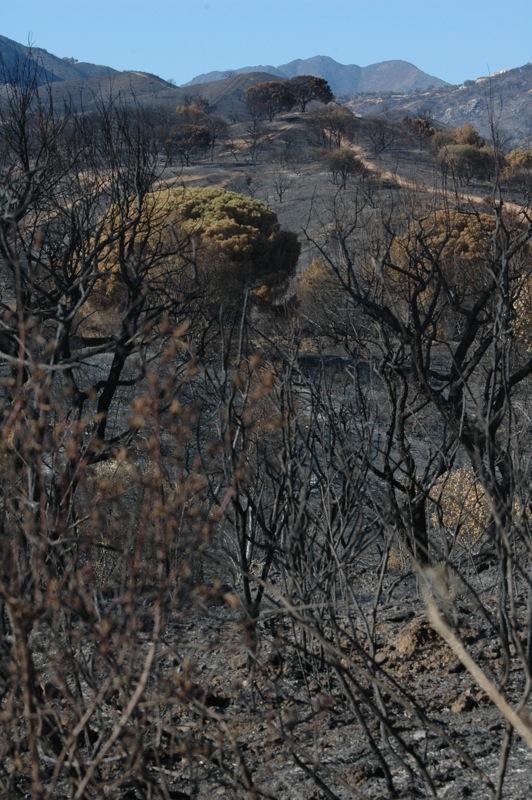 Landskapet skiftar i gråa toner.<br /><br />---<br /><br />El paisaje cambia de tonos grises.