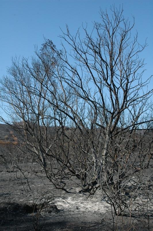 Löven är borta.<br /><br />---<br /><br />Han desaparecido las hojas.