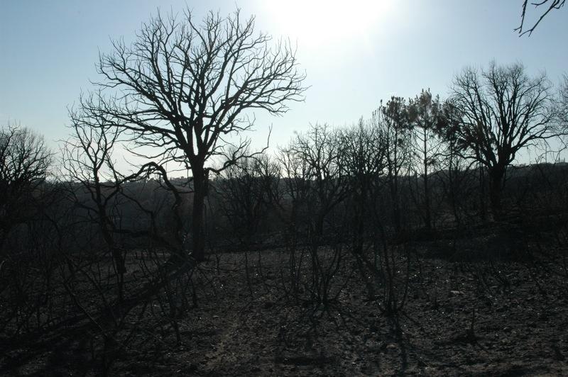 Ett naket landskap.<br /><br />---<br /><br />Un paisaje desnudo.