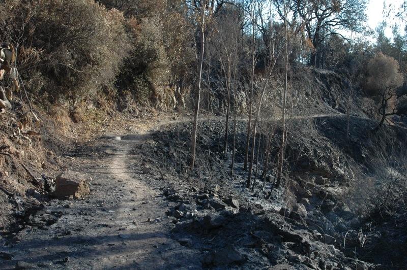 Stigen har p&aring; vissa platser fungerat som en brandv&auml;gg.<br /><br />---<br /><br />En algunas partes el camino ha hecho de cortafuegos.