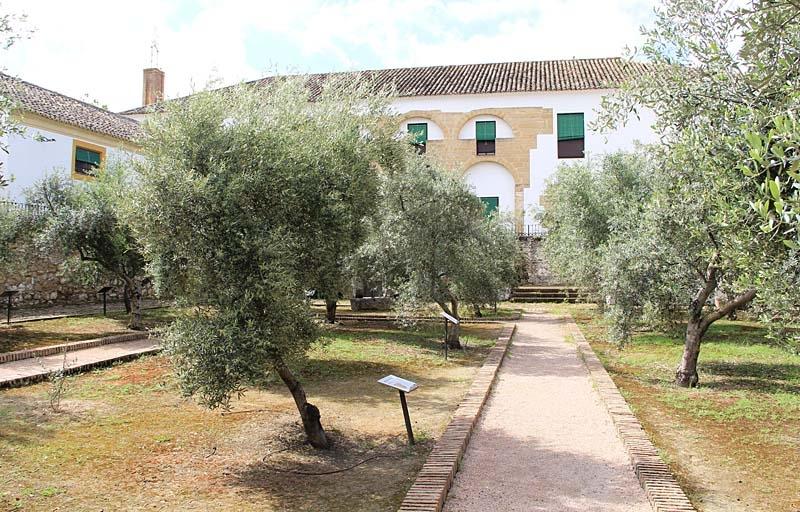 Olivträd från en mängd olika länder i olivmuséet Hacienda La Laguna (Baeza).
