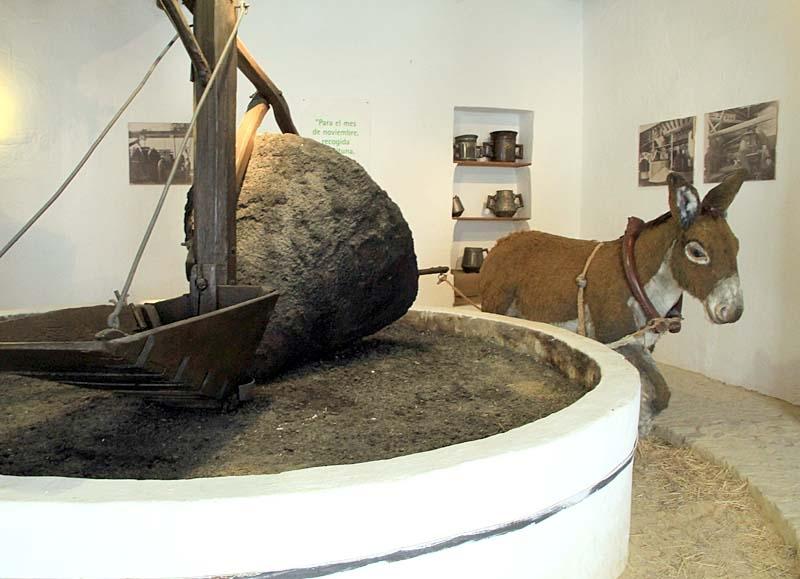 En åsna fick göra grovjobbet i de traditionella olivkvarnarna.