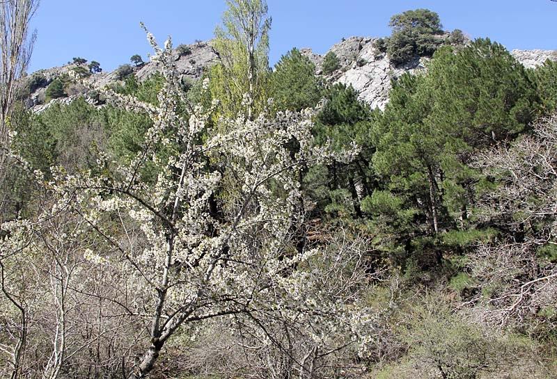 Sierras de Cazorla i full blom.