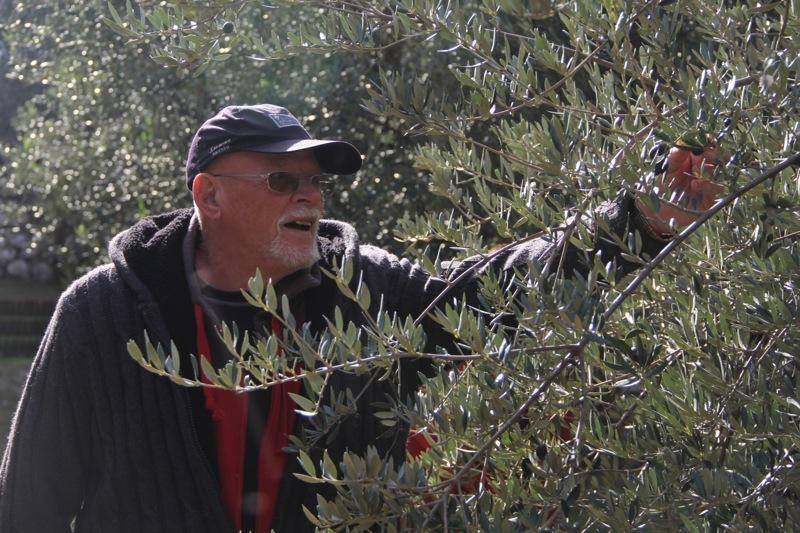 Foto från Sydkustens tredje resa till Jaénprovinsen, i samband med olivskörden 2014. OLIVMUSÉET I HACIENDA LA LAGUNA (BAEZA) Fotograf: Richard Björkman