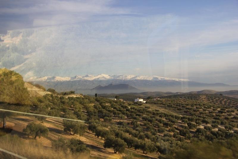 Foto från Sydkustens tredje resa till Jaénprovinsen, i samband med olivskörden 2014. SIERRA NEVADA Fotograf: Richard Björkman
