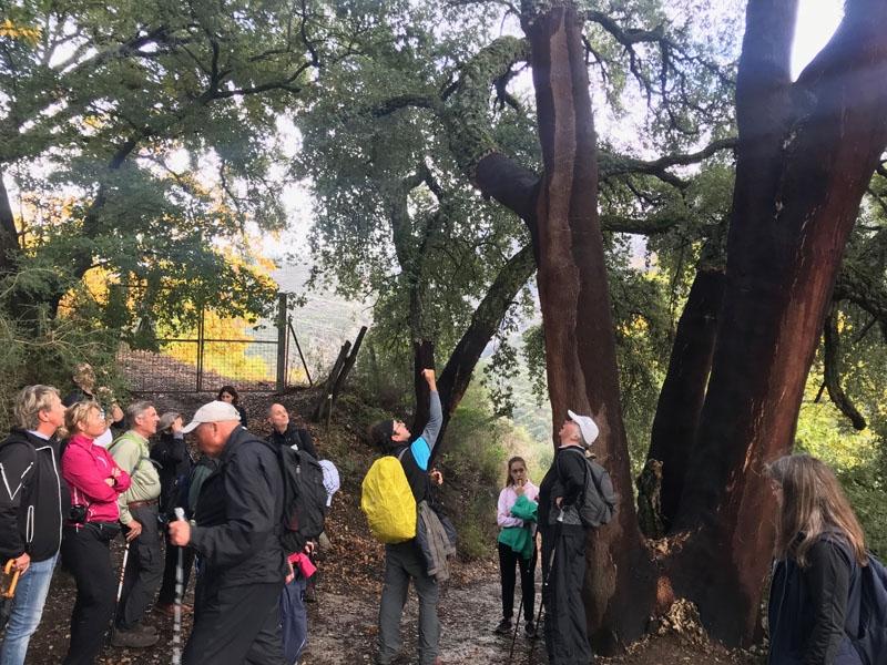 Foto från vandringen 17 november 2018 i Valle del Genal.