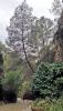 Vandringen längs Río Chíllar bjuder på både klippformationer och intensiv grönska. Det växer bland annat furuträd och fikonträd vid vattenbrynet.