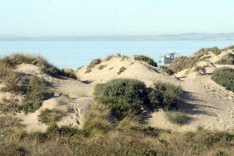 Sammanlagt åtta dynområden öster om Marbella har beskyddats. Foto: Asociación Pro Dunas