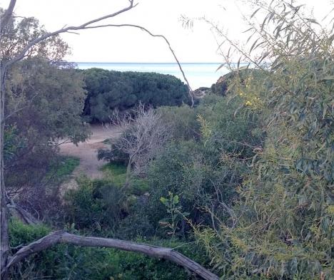 Det naturskyddade området vid Dunas de Artola upptar en yta av 30 hektar.