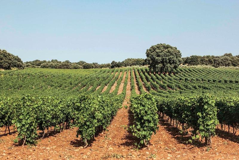 Denna gång tar Björn af Geijerstam med oss på en vinresa inte långt från Costa del Sol. Närmare bestämt till vingårdar i Gaucín, Ronda (bilden) och Arcos de la Frontera. Foto: Los Aguilares