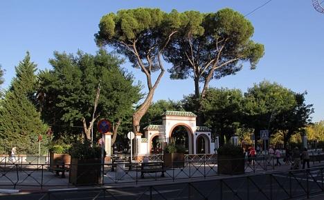 Entre till park med två majestätiska pinjeträd.