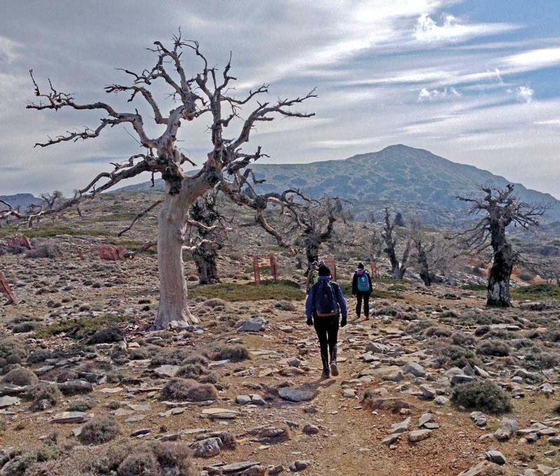 El Torrecilla är med sina 1.919 meter över havet en av de högsta topparna i Málagaprovinsen. Vandringen är krävande men värd ansträngningen, både för landskapet och utsikten.