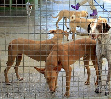 Förra året avlivades cirka 700 djur i Málaga, de flesta av dem hundar.