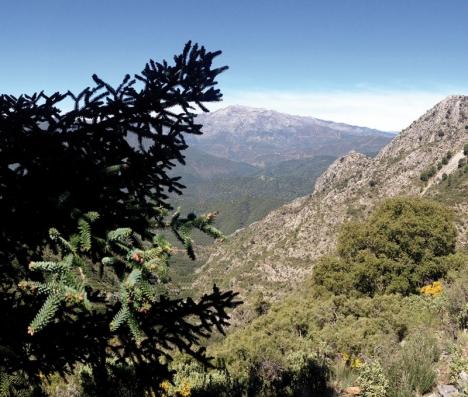 I Sierra Blanca och Juanar råder ett mikroklimat som gynnar en rik flora och fauna. Här finner man bland annat den unika granen pinsapo.