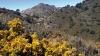 På över tusen meters höjd kan man uppleva något av ett fjällandskap, där det bland annat växer vacker ginst.
