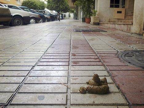 Hundspill på central gata i Marbella.
