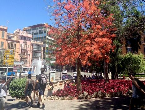 Turister i Palma stad.