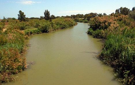 De senaste två somrarna har Málaga lidit flera mygginvasioner, som härleds till Guadalhorceflodens mynning. Foto: Okenok/Wikimedia Commons