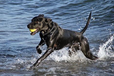 Det blir fritt fram i sommar för hundar vid två stränder i Marbella.