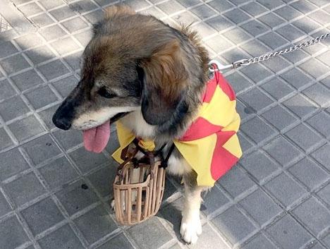 Den katalanska konflikten eskalerar. Foto: Petra S.G