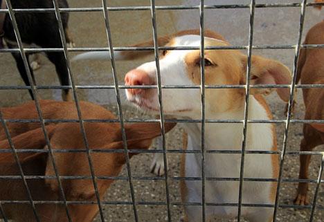 Hundratals hundar och katter i den kommunala djurgården i Torremolinos avlivades under plågsamma former.