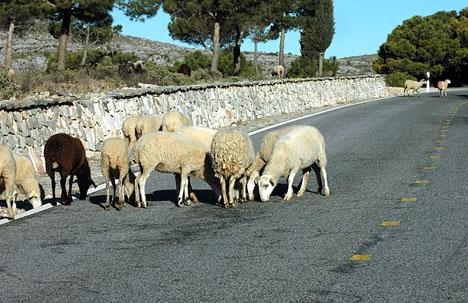 Det är inte bara radarkontrollerna som gör att man bör köra försiktigt mellan Ronda och kusten.