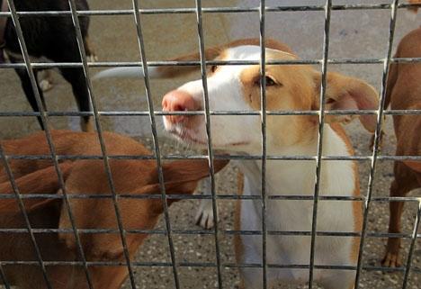 Marín har dömts till fem års fängelse för att ha låtit avliva hundratals hundar och katter under plågsamma former.