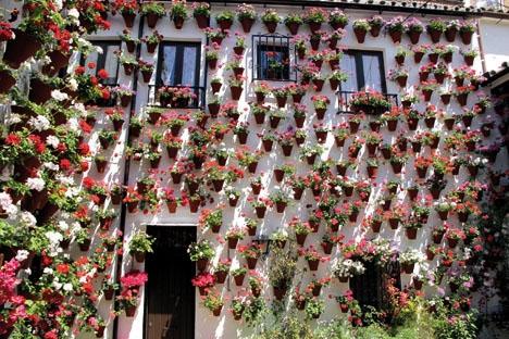 Det är väl värt mödan att ta sig til Córdoba i maj och uppleva patiofestivalen. Som kompensation för köer och hetta får man njuta av gränslös prakt och även möjlighet att njuta av stadens kulinariska utbud.