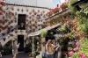 Några av innergårdarna är berömda och kammar hem nästan varje år något av priserna.