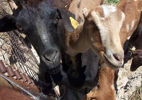 Reformförslaget berör inte bara husdjur utan även boskap.
