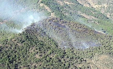 Branden omfattar främst pinjeträd i ett svårtillgängligt bergsområde. Foto: Infoca