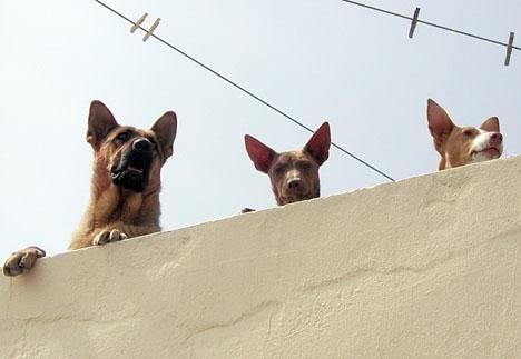 Regelbundet måste en stor mängd hundar undsättas från sina så kallade skötare.