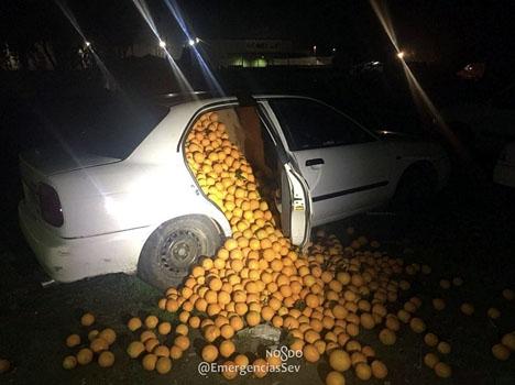 Häpna poliser fann tre bilar fulla till brädden av apelsiner. Foto: Policía local de Sevilla