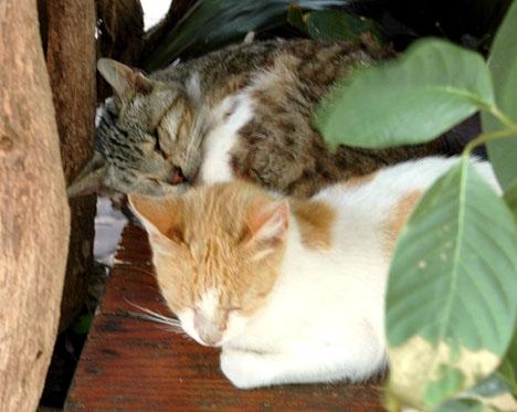 Fem av de förgiftade katterna avled och de tre övriga fick men för livet. ARKIVBILD