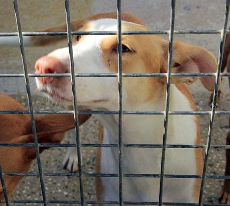 De framtida hundfångarna i Marbella får avliva djuren om ingen gjort anspråk på dem efter tio dagar.