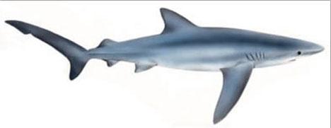 Varken den blåhaj som skådades i Fuengirola eller de andra arter som existerar vid den södra Medelhavskusten utgör någon fara för människor.