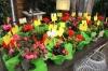 Besöket avslutades med en cocktail och samtliga fick med sig en blomma som minne.