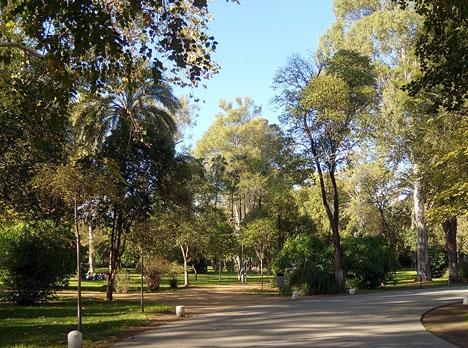 En formell utrotning av fladdermöss är på väg att ske i María Luisa-parken i Sevilla. Foto: Gzzz/Wikimedia Commons