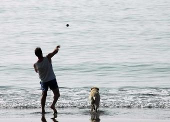 En idyllisk promenad i Fuengirola slutade tragiskt för både en husse och hans hund. ARKIVBILD