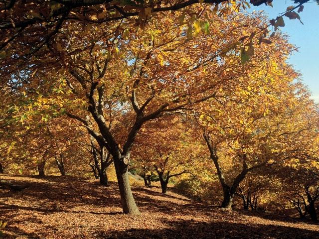 Under knappt två veckor någon gång i månadsskiftet oktober-november uppstår den så kallade