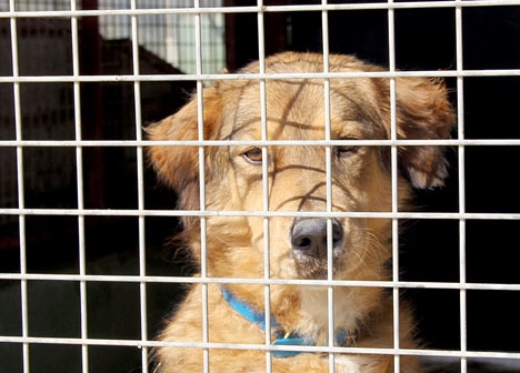Den som adopterar en herrelös hund i Fuengirola får kostnaderna täcka av kommunen.