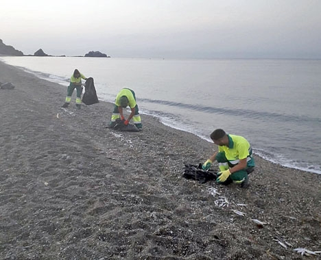 Kommunalarbetare samlar in den döda fisken. Foto: Ayto de Almuñécar